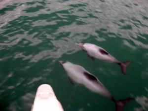 Delfiiiiiine!